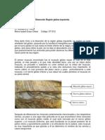 Disección Región Glútea Izquierda-Maria Isabel Eraso
