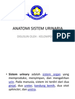 Anatomi Sistem Urinaria Kel2