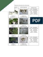 Hasil Pengamatan Chlorophyta Secara Makroskopis
