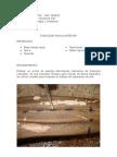 Diseccion Miembro Inferior Muslo Anterior -Alvaro Orozco