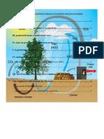 Chapitre III Les Transferts D'énergie Et De Matières Dans Les Ecosystèmes