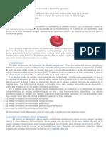Fisiología del eritrocito