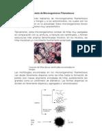 Crecimiento de Microorganismos Filamentoso1