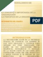 4.1 Concepto e Importancia de La Organizacion 4.2 Principios de La Organizacion Unidad IV