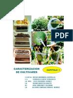 Libro MIC Guanábana en Colombia