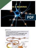 Clase 3 La Neurona