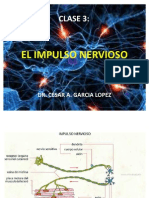 Clase 4 El Impulso Nervioso