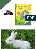coelho branco