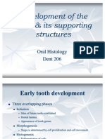 Early Tooth Development
