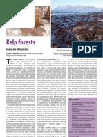 Kelp Forests Dec 2011