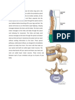 The Vertebral Column Provides Structural Support for the Trunk and Surrounds and Protects the Spinal Cord