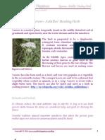 Yarrow – Achilles' Healing Herb