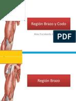Anatomia de Miembro Superior :Región Brazo y Codo