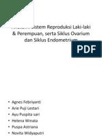 Anatomi Sistem Reproduksi Laki-Laki & Perempuan