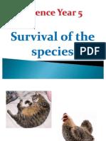 Science Year 5 Survival of Species