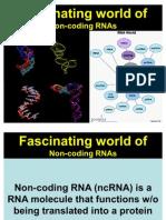 ncRNA