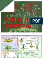 Siklus Hidup Bryophyta