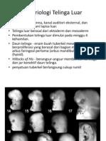 embrio pinna
