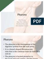 (Gen Ana) Pharynx