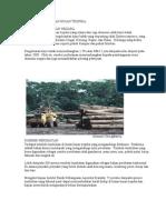 Kepentingan Hutan Hujan Tropika