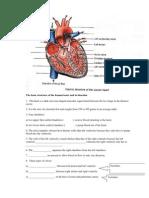 Chapter 1 (Internal Human Heart)