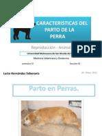 GESTACIÓN Y PARTO DE LA PERRA