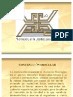 Fisiologia Contraccion Muscular