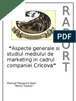53131556-Cricova-raport