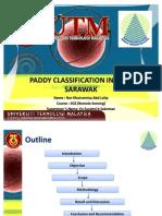 PADDY CLASSIFICATION IN SIBU, SARAWAK
