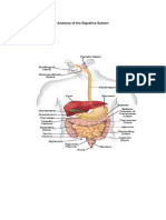 Anatomy of the Digestive System and Circulatory System