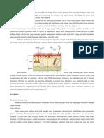 Patofisiologi Kontak Dermatitis