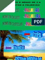 cartel palmeira 2ºA