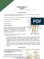 Ficha de Informativa Sistema Locomotor