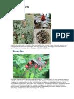 Food - Poisonous Plants