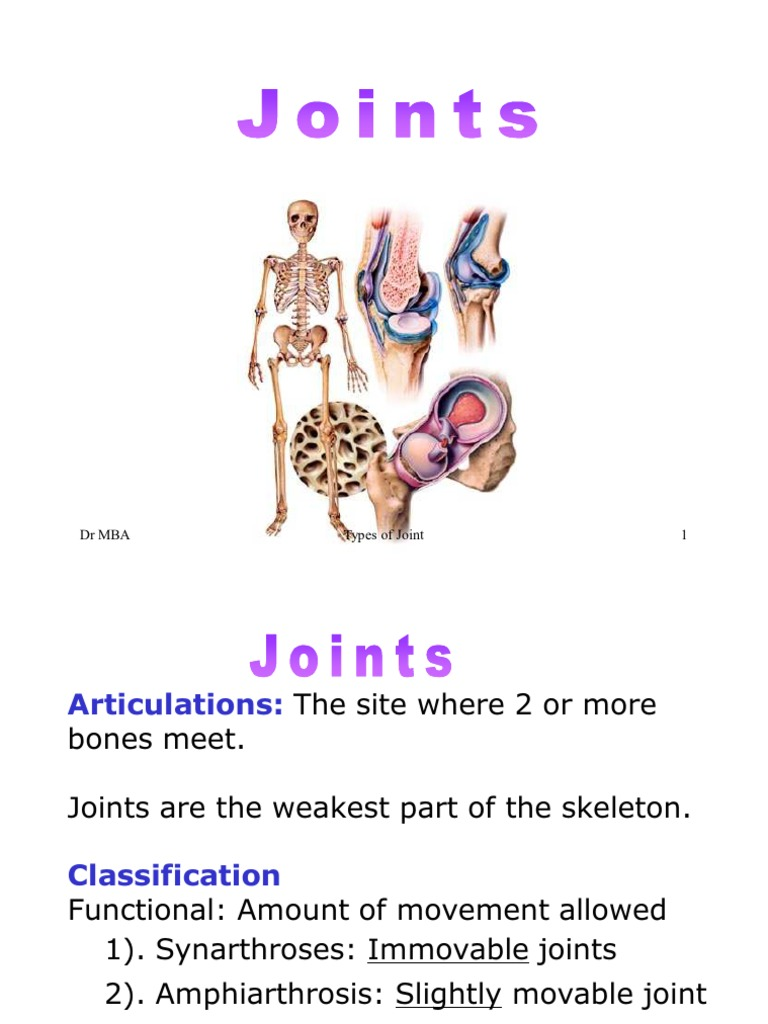 what is an amphiarthrotic joint