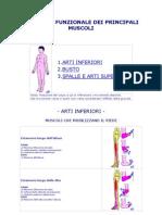Anatomia Funzionale Dei Principali Muscoli