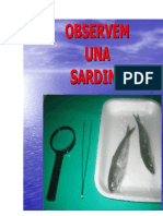 Observaci d'Una Sardina i d'Un Pedrer
