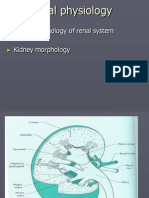 Renal Physiology Overview - PP