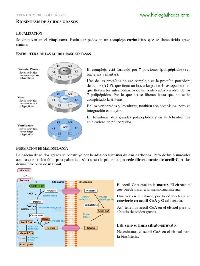 Más sobre definicion metabolismo basal