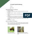 Gejala Klinis Dan Tanda Flu Burung
