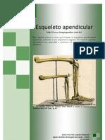 Esqueleto Apendicular- Prof. Me. Leandro Nobeschi