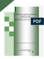 Anatomia de superfície e palpatória do punho e mão - Prof. Me. Leandro Nobeschi
