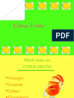 Citrus Fruits Revised