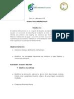 Practico Sistema renal sec 2