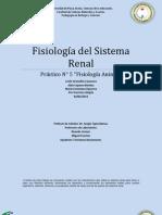 sistema renal sec 1
