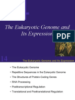 The Eukaryotic Genome And