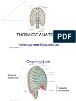 Thoracic Anatomy Colour