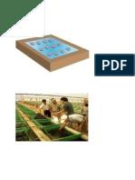 Abalone Farming Details
