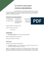 Descripción de Pared Abdominal y Región Inguinal