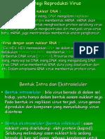 Strategi Reproduksi Virus DDMA